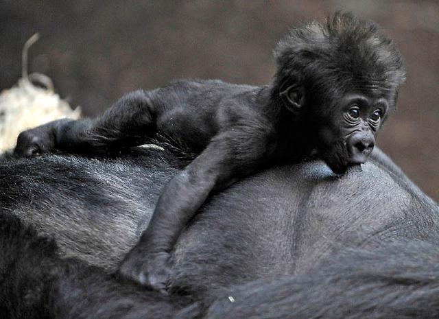 Детеныши животных (Цасть 1) - 5 Ноября 2011 - Бесплатно скачать х х х