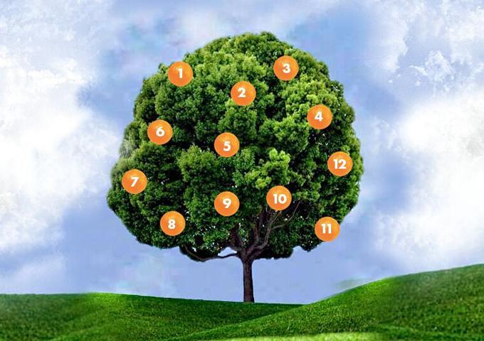Дерево желаний: загадайте же…