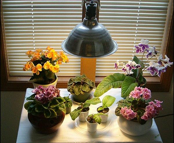 освещение для комнатныъ растений