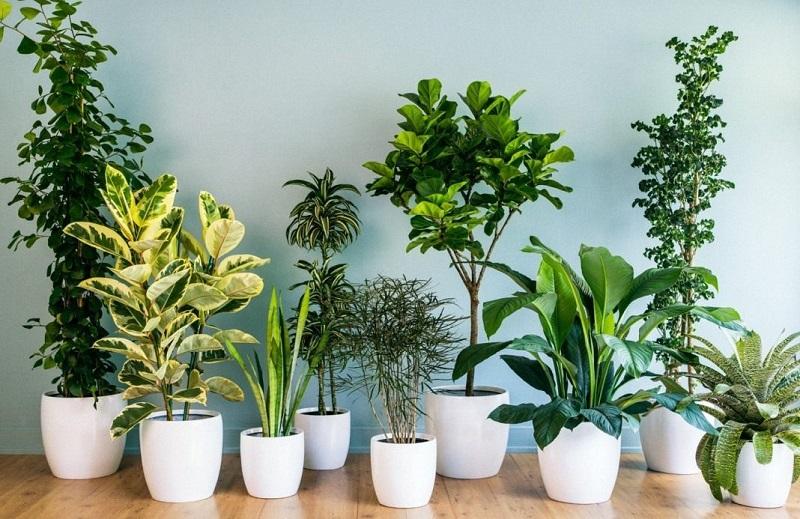 Проводница придумала способ полива комнатных растений. Сколько бы она ни находилась в рейсе ее цветы не увядают