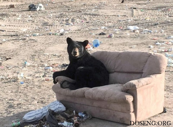 Медведь комфортно устроился …