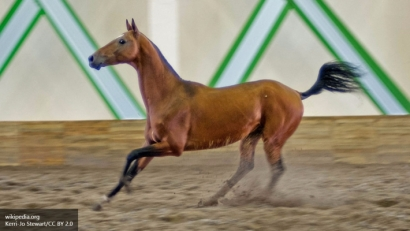 Ученые обнаружили у лошадей уникальную способность