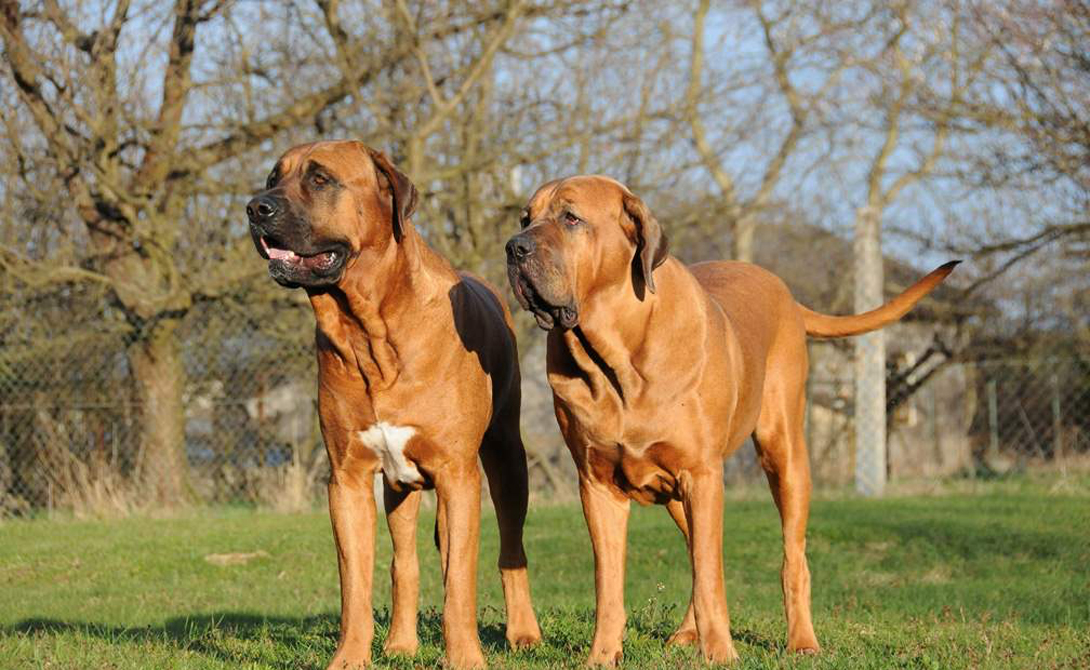 10 самых опасных для человека собак