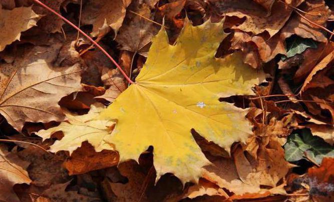 Картинки по запросу Опавшая листва — неплохой укрывной материал