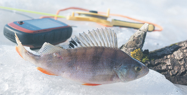 Рыбак-Рыбака