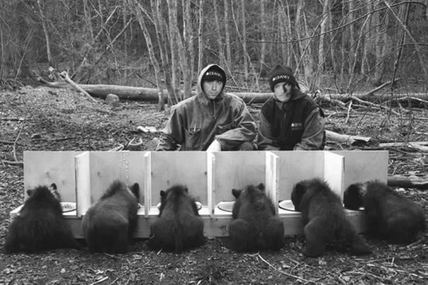 Медвежье царство
