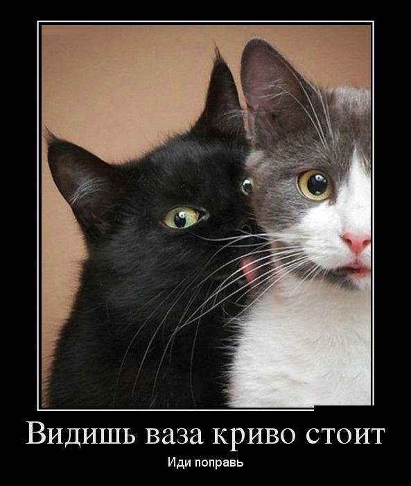 Демотиваторы + анекдоты подб…