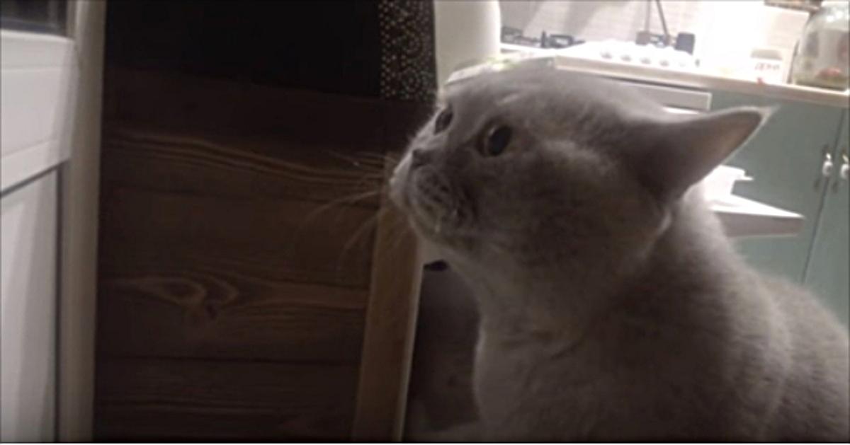 «Открой мне!» — кот просит х…