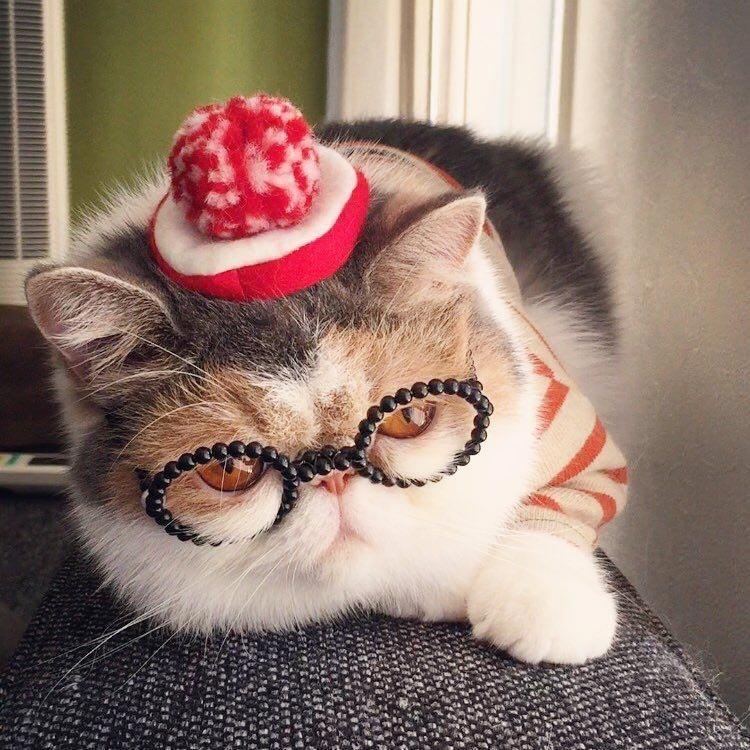 Буона — очаровательная японская кошка с безупречным чувством стиля