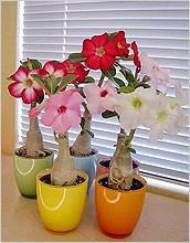 Какие цветы можно выращивать на солнечном подоконнике?