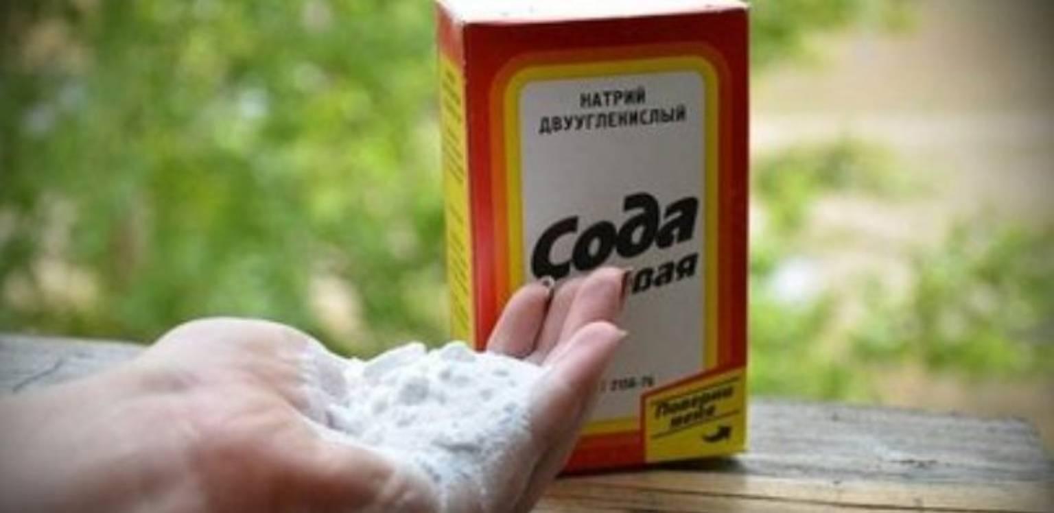 Image result for Сода в огороде