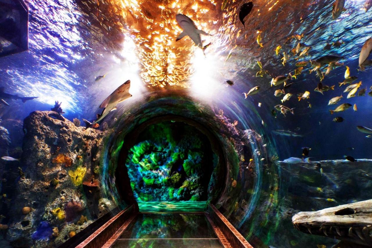 Океанариум Сингапура Сингапур. Океаны в миниатюре. Самые известные и крутые океанариумы мира. Фото с сайта NewPix.ru