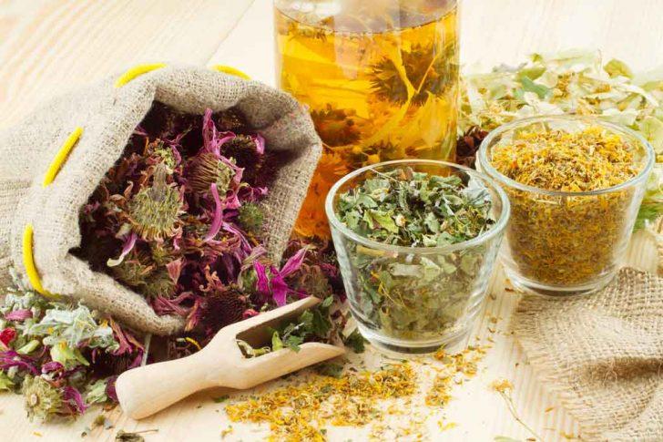 Лекарственные травы при ревматизме и подагре