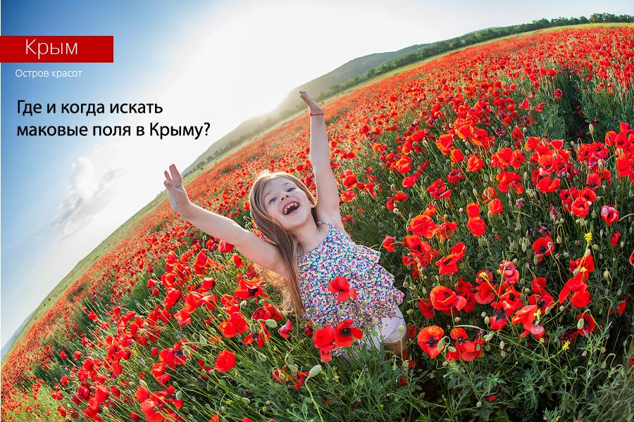 Где и когда в Крыму искать маковые поля?