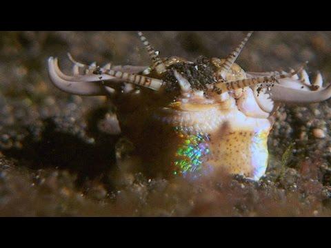 Смертельная атака подводного трехметрового червя…