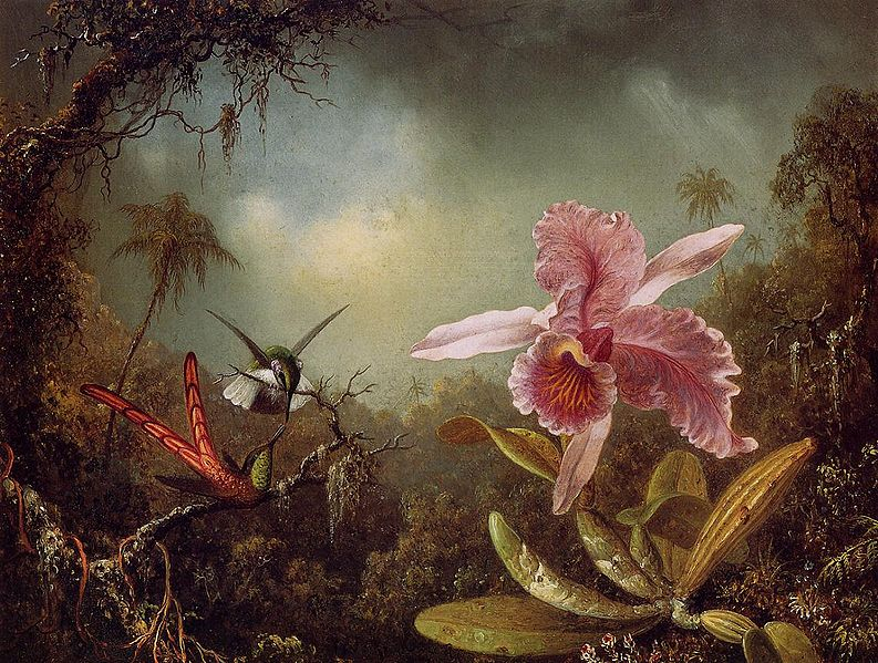 File:Orchid with Two Hummingbirds 1871.jpeg