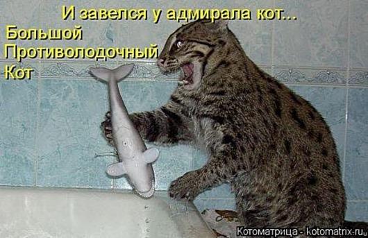1495826266_kotomatricy-19