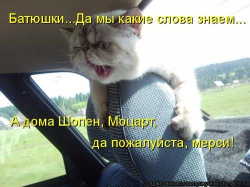 Новая смешная котоматрица