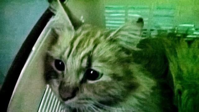 7 месяцев борьбы за жизнь. Студенты из Серпухова нашли на дороге искалеченного кота