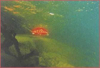 Примерно так видят под водой форель...