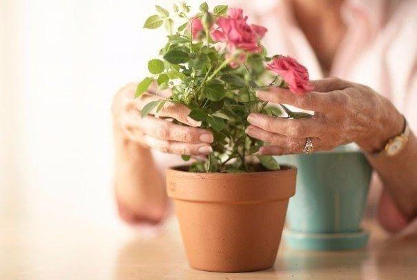 Какие цветы нужно держать дома, если…