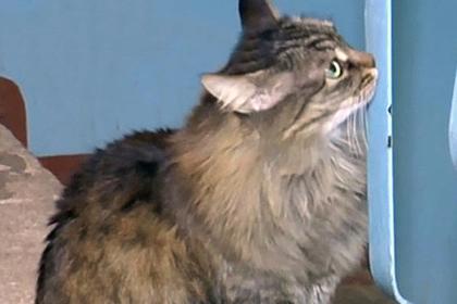Спасшая ребенка-подкидыша российская кошка стала героиней мировых СМИ