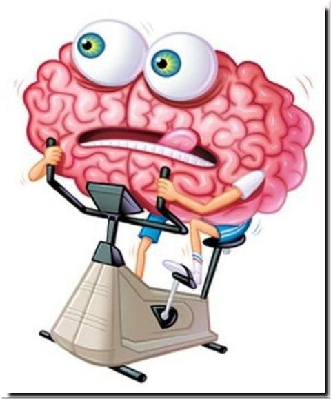 ХИЖИНА ЗДОРОВЬЯ. Как развить способности мозга