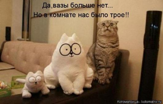 1480083115_svezhaya-kotomatrica-19