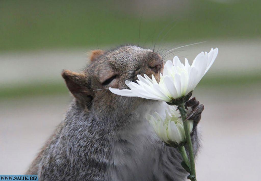 Экологи прогнозируют уменьшение размеров животных