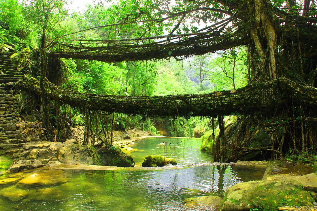 Лес Мегхалая, Индия