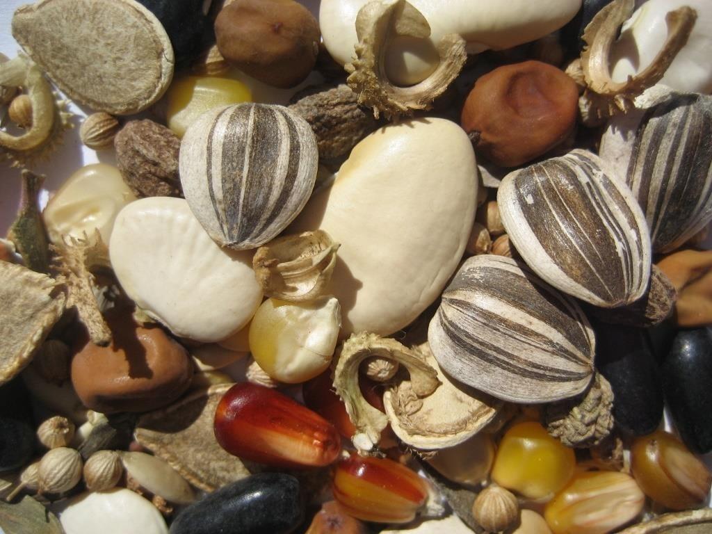 Пора подумать о семенах: что уже сейчас можно сделать для будущего урожая
