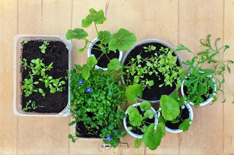 Чем подкормить растения, что…