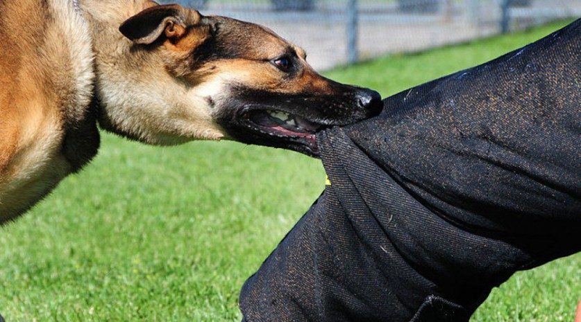 Что делать при нападении собаки