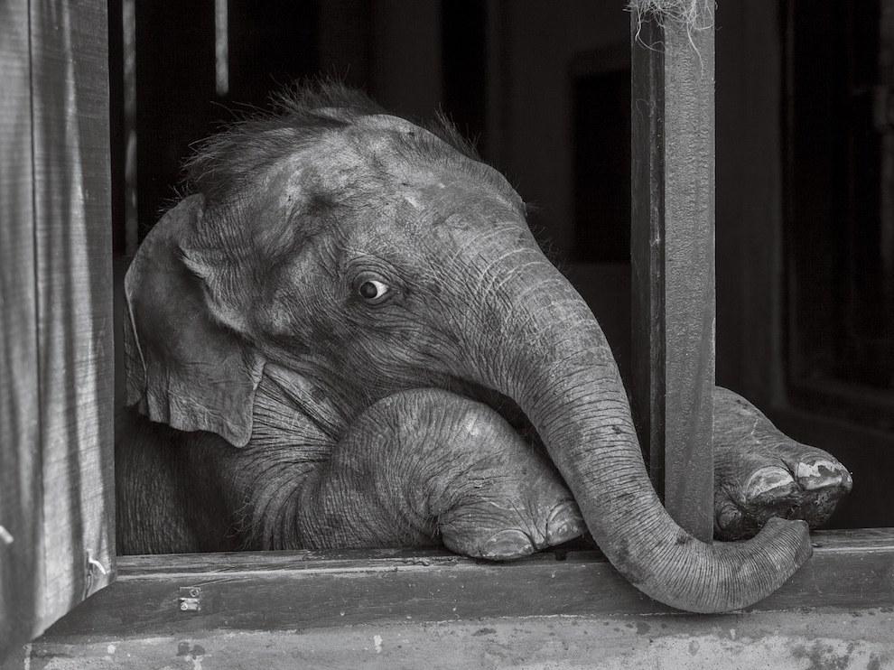 Слоненок, Индия
