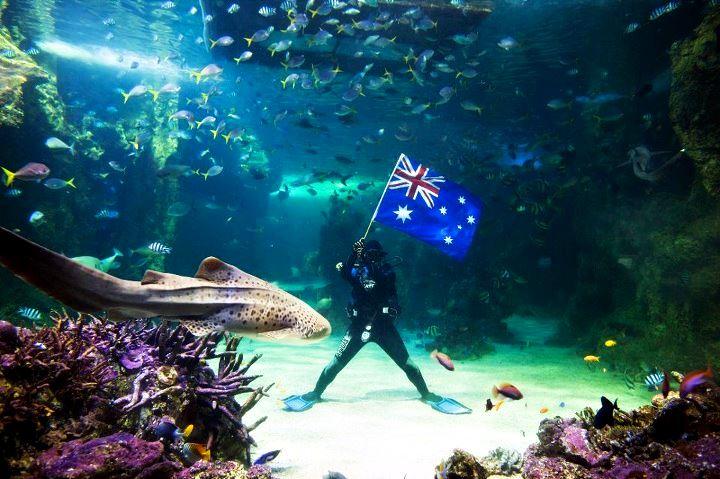 Океанариум Аква Австралия. Океаны в миниатюре. Самые известные и крутые океанариумы мира. Фото с сайта NewPix.ru