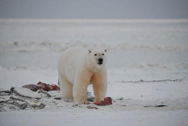 Медведи боятся палок