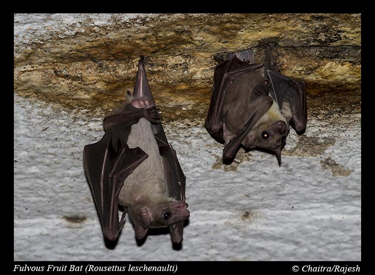 У летучих мышей в Китае нашл…