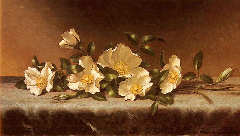 File:Heade Martin Johnson Cherokee Roses On A Light Gray Cloth.jpg