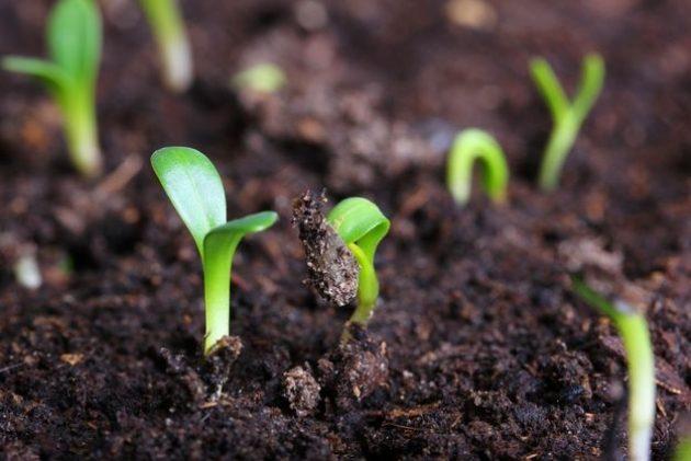 4 способа дезинфекции почвы