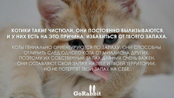 Повадки животных, которые значат совсем не то, что ты думаешь