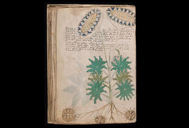 Что скрывает загадочная и не поддающаяся расшифровке рукопись Войнича
