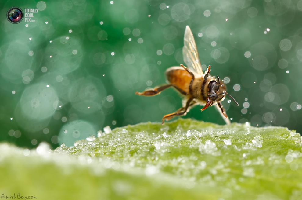 aimishboy 024 Удивительная макрофотография: неожиданно гламурные насекомые и многое другое