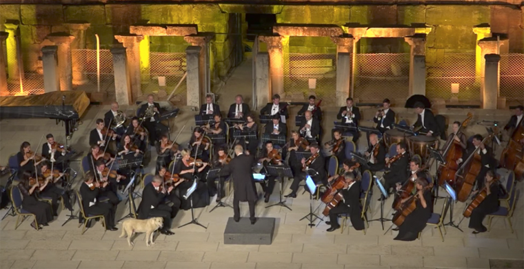 Лабрадор сорвал овации на выступлении Венского камерного оркестра