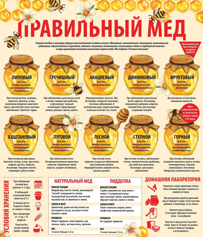 Картинки по запроÑу виды меда