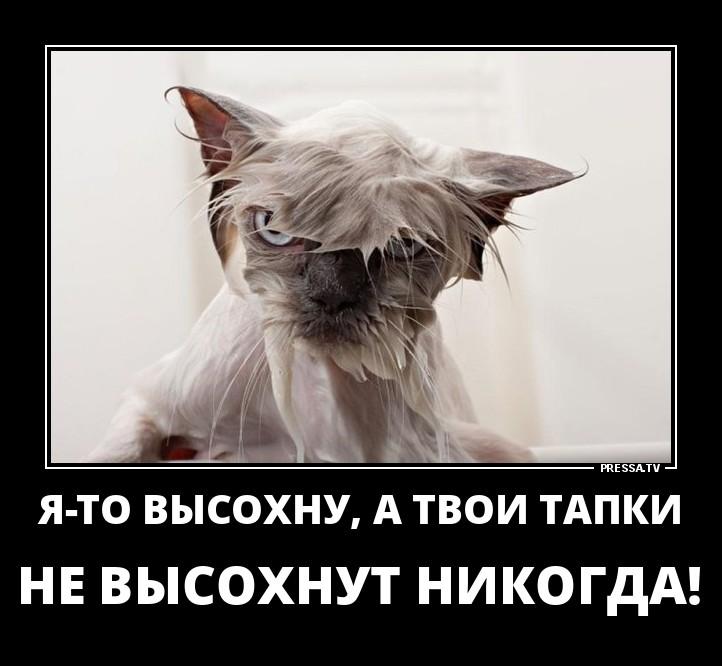 http://mtdata.ru/u5/photoA6D7/20341956113-0/original.jpg