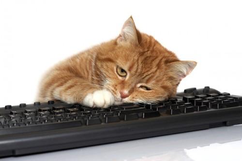 Почему кошки любят клавиатуры? забавно, клавиатура, кошки