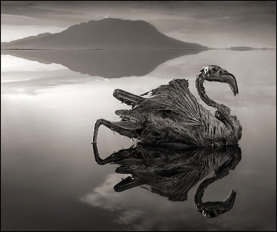 Озеро, превращающее животных в камень