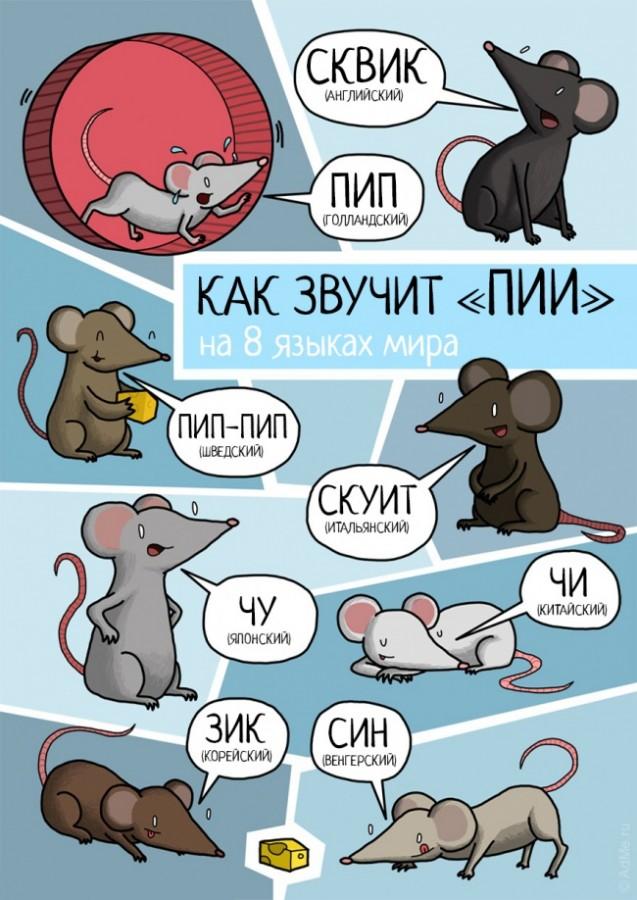 А так на разных языках звучат животные