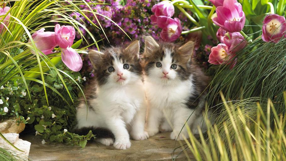 тюльпаны, Котята, цветы, кошки, зелень, животные, малыши