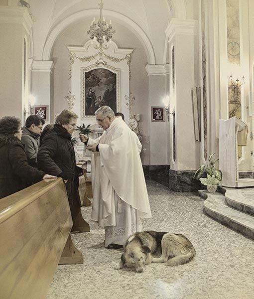 Собака ежедневно приходит в церковь и ждет умершую хозяйку.